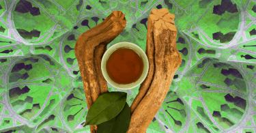 meilleur-ayahuasca