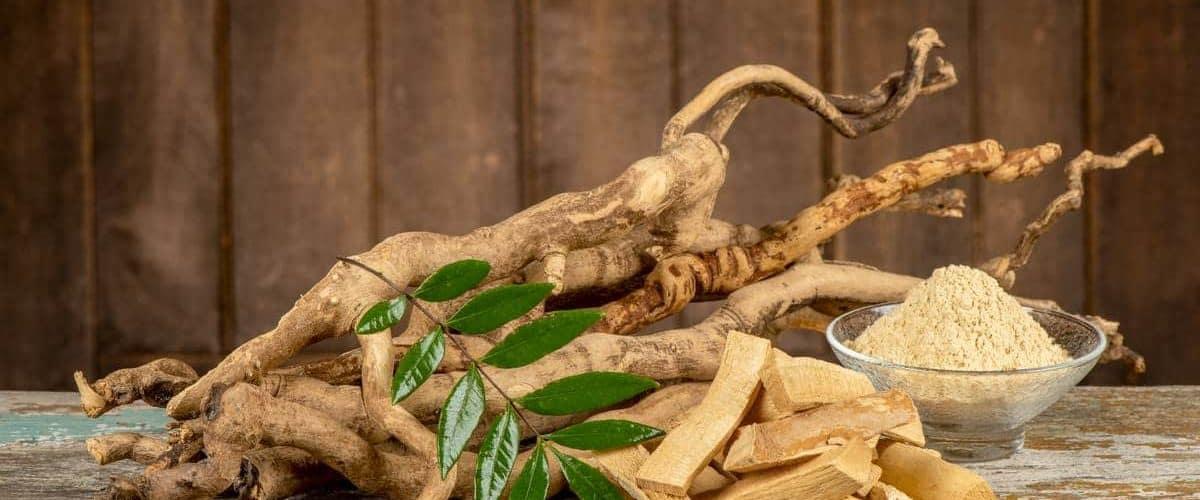 meilleur-tongkat-ali